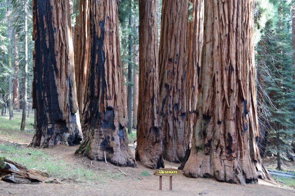 Senat w Sequoia Park